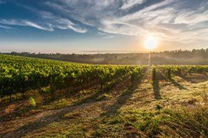 Spaanse-witte-wijn