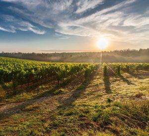 Spaanse witte wijn