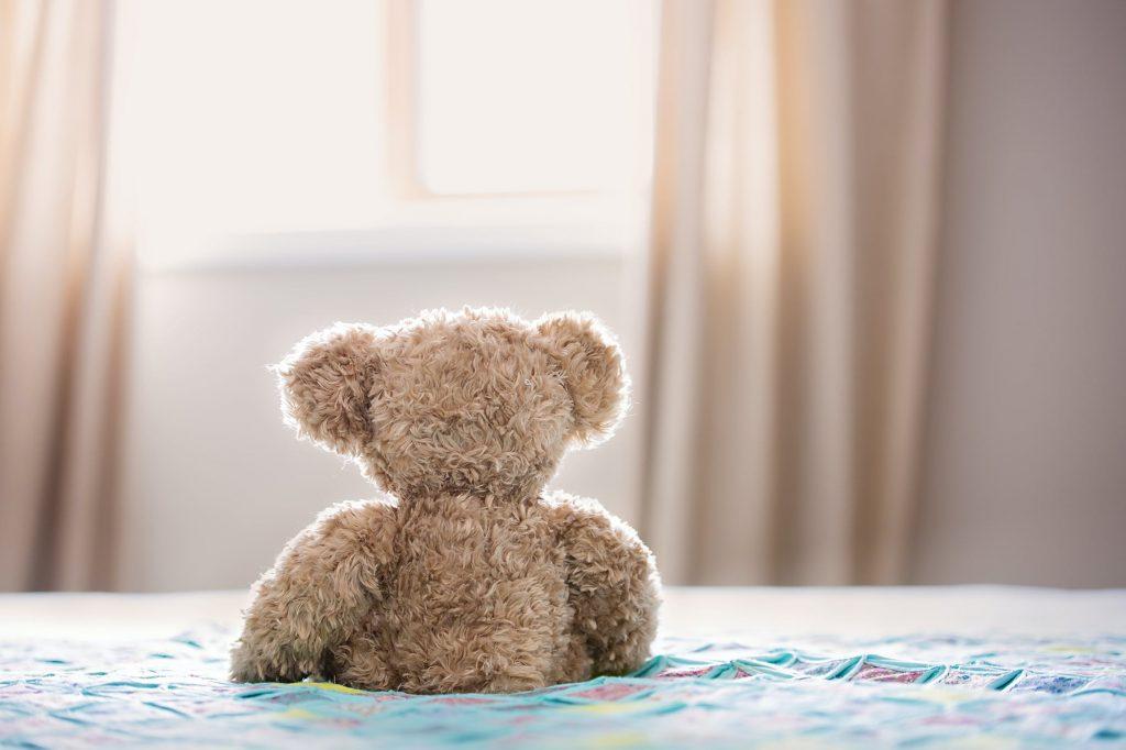 teddy stof